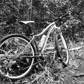 Bicycle in the forest by Carmen Bouwer - Transportation Bicycles ( nature, black and white, enchanted, forest, object, bicycle )