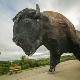 World's Largest Buffalo Statue by Nancy Merolle - Buildings & Architecture Statues & Monuments ( largest buffalo statue, buffalo, statue, north dakota, jamestown )