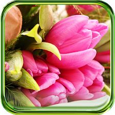 Pink Tulips HD LWP
