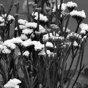 B &W FLOWERS # 4 by Debanjan Goswami - Flowers Flower Gardens (  )