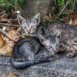 Kittens by Erl de Jose - Animals - Cats Kittens ( cats, animals, sideroad, pets, kittens )