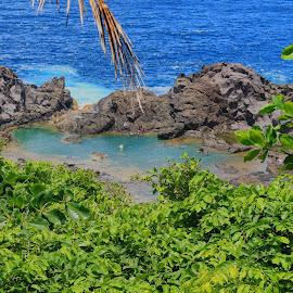 Salt Pond by Melony Mejias - Landscapes Travel ( nature, saintvincent, pond, caribbean, island )