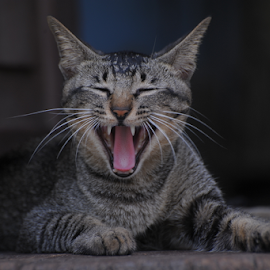 by Pandu Hari Santoso - Uncategorized All Uncategorized ( laugh cat, cat, selatpnjang )