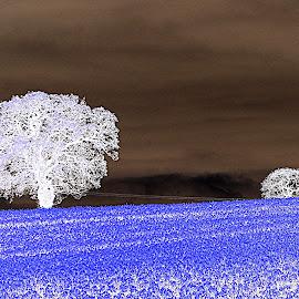 Fields  by Ann Seedhouse - Digital Art Places ( field, blue, trees, landscape, infa red )