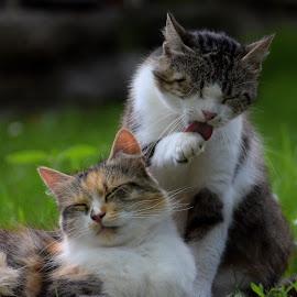 by Valentina Masten - Animals - Cats Portraits