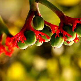 Fruits of passion by Anindya Sengupta - Nature Up Close Flowers - 2011-2013