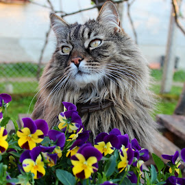 by Anny  An - Animals - Cats Portraits ( cat, cat portrait, beautiful, flowers )