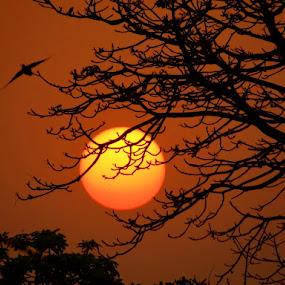 Red evening by Subrata Sarkar - Nature Up Close Flowers - 2011-2013 ( nature, sunset )