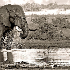 The waterhole by Pieter J de Villiers - Black & White Animals