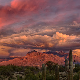 Mountain Bloom by Charlie Alolkoy - Landscapes Deserts ( clouds, sky, desert, mountain, sunset, arizona, tucson, sunrise, cactus )