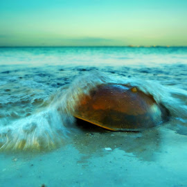 by Ken Byrne - Landscapes Beaches ( water, sand, nature, blue, shoreline, wave, horizon, beach, motion, animal )