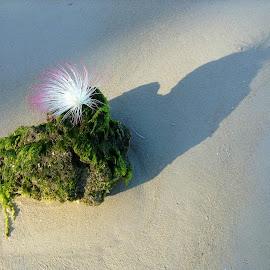 ZENplicity by Dick Shia - Nature Up Close Rock & Stone ( rock, bloom, beach )