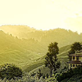 TeaHouse @ Cameron Highlands, Pahang Malaysia by Harris Daniel - Landscapes Mountains & Hills