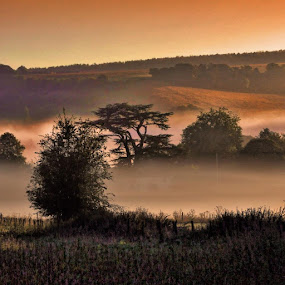 Oxfordshire Bonsai Dawn by Anthony D'Angio - Landscapes Prairies, Meadows & Fields ( hills, dawn, warm, oxfordshire, trees, meadows, sunrise )