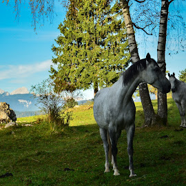 Idila by Bojan Kolman - Animals Horses