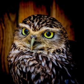 Haven 11 by Kelly Murdoch - Animals Birds