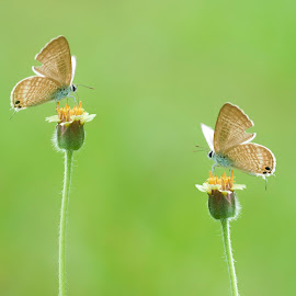 Two Gather by Andy Moerijanto - Digital Art Animals ( macro, buterfly, blended, insects, flowers, small )