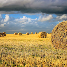 Hay There by Tracey Dolan - Landscapes Sunsets & Sunrises ( field, clouds, sky, blue, sunset, hay, landscape, colours. )