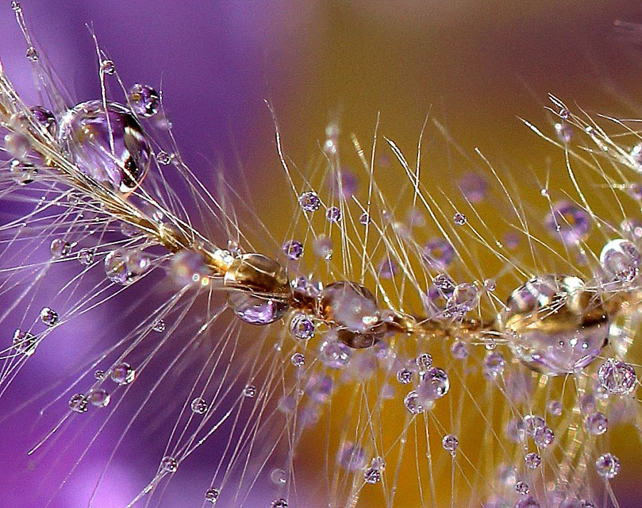 by РАЙНА СИНДЖИРЛИЕВА - Nature Up Close Other plants