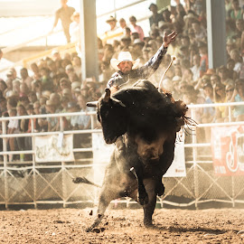 The Finale by Joe Spena - Sports & Fitness Rodeo/Bull Riding ( cowboy, riding, rodeo, sport, bull, country )