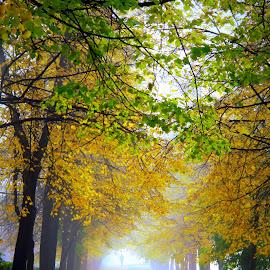 by Эдуард Петруша - Landscapes Travel ( улица, парк, липы, листва, утро, город, зелёный, осень, деревья, туман, жёлтый )