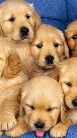 Screenshot of Puppy Live Wallpaper