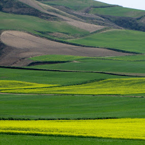 lovely spring by Hamed Ghalandar - Landscapes Prairies, Meadows & Fields ( iran, golestan province, spring, minoodasht )