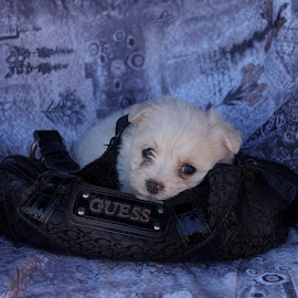 Snoopy by Lize Hill - Animals - Dogs Puppies