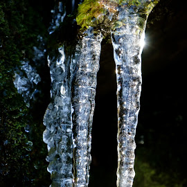 Icicle  by Terje Gustavsen - Nature Up Close Water ( reflection, ice, icicles, icicle, light, sun )