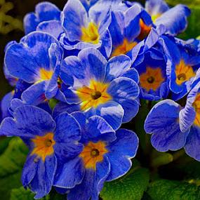 Blue bouquet by Radu Eftimie - Flowers Flower Gardens ( blue, flowers )