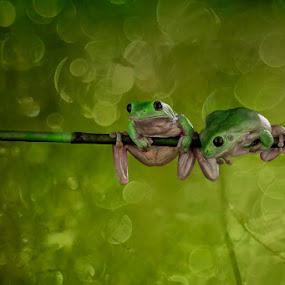 by Nicholas Wibowo - Animals Amphibians