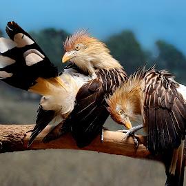 Spring Cleaning by John Larson - Animals Birds