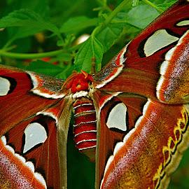 by Karen McKenzie McAdoo - Animals Insects & Spiders