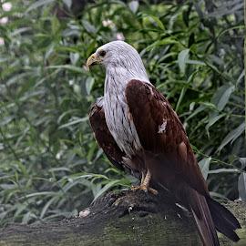 RF 16 by Michael Moore - Animals Birds