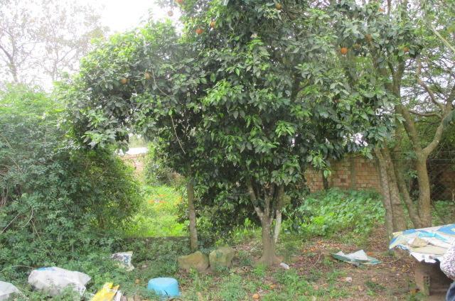 Casa 2 Dorm, Florescente, Viamão (CA0557) - Foto 7