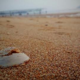 An evening on the beach by Vinayak Salgaonkar - Animals Sea Creatures ( sand, sea creature, bridge, beach, evening )