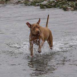 Running Free by Janet Marsh - Animals - Dogs Running ( pillar point, dog )