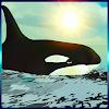 Whale Simulator 3D