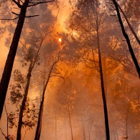 Conflagração by Tempo Cativo Paulo Borges - Landscapes Forests ( conflagração, 7º aniversário, incêndio, floresta, fogo, floresta queimada, fumo, omfd, o mundo da fotografia digital, imagens com história )