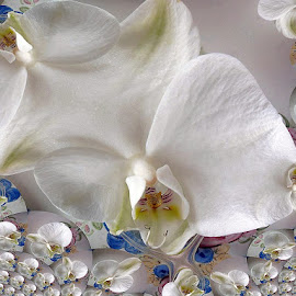 orchid fractal by Paul Wante - Digital Art Things ( abstract, orchid, art, fractal, photography )