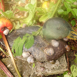 The Snail Hotel by Angie Keverne - Novices Only Wildlife ( snails, rhubarb, duck, compost, garden,  )