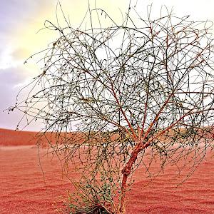desert plant 26jun12 .JPG