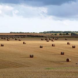 Wheat fields by Foto Woz - Landscapes Prairies, Meadows & Fields ( wheat field, wheat, daytime, prairies, wheat rolls field, fields )