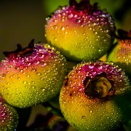 Berries by Adrian Kurbegovic - Nature Up Close Gardens & Produce