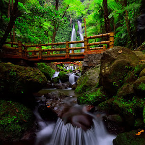 The Green Forest by Hendri Suhandi - Landscapes Forests ( tree, jungle, green, waterfall, java, forest, travel, karanganyar, garden )