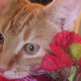 Pumpkin by Marcia Taylor - Animals - Cats Portraits (  )