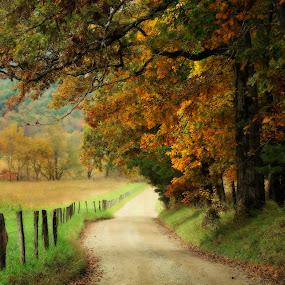 Autumn Pathway by Karen Carter Goforth - Uncategorized All Uncategorized ( fence, autumn, fall, path, trees, road, dirt,  )