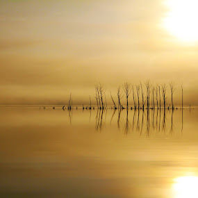 Foggy Refelection by Roger Becker - Landscapes Waterscapes ( water, dawn, nature, tree, landscape,  )