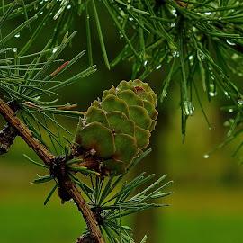 Fresh rain by Vláďa Lipina - Nature Up Close Natural Waterdrops