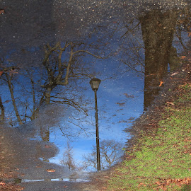 Reflections  by Larry Gray - Nature Up Close Water (  )